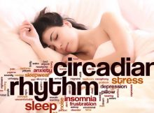 The Circadian Rhythm